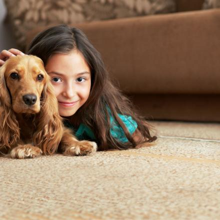 Pet Urine Odor Removal image